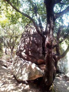 Дерево3_1