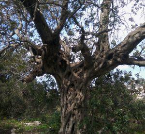 дерево4_